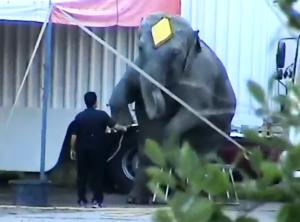 Elefanten kvepper